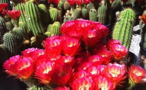 attraction-bb-cactus-farm